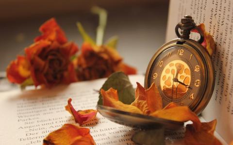 花,手表,口袋,玫瑰,花瓣,书