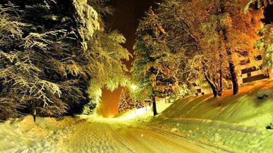 路,雪,冷杉,光,圣诞节
