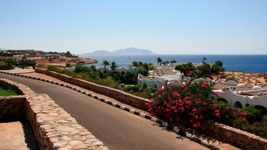 埃及的城市,景观的道路,开花植物,海,海
