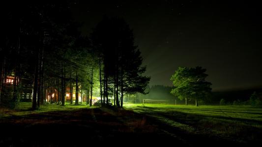 森林,性质,幻想,晚上,树木