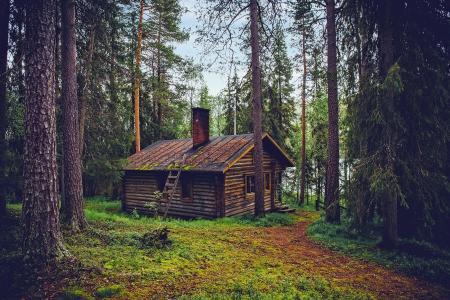 森林,小屋,芬兰