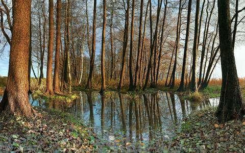 性质,德国,树,水,照片,秋季,叶子,叶子,秋季壁纸