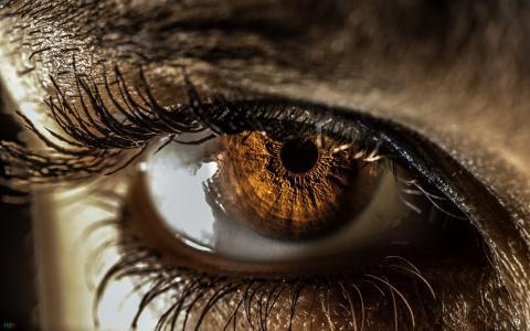 眼睛,宏,背景