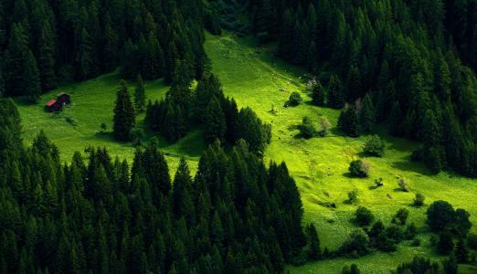 山,针叶林,斜坡,建筑物,夏天