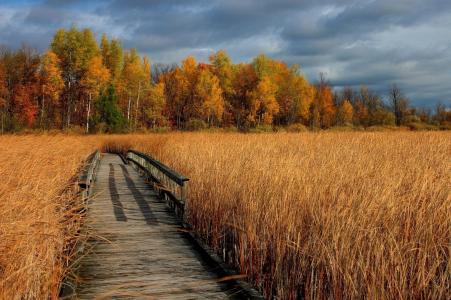 线索,秋天,美丽的照片,景观,金色的领域