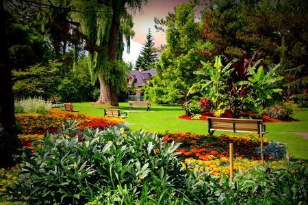 加拿大,花园,万寿菊,草坪,树木,长凳,灌木丛
