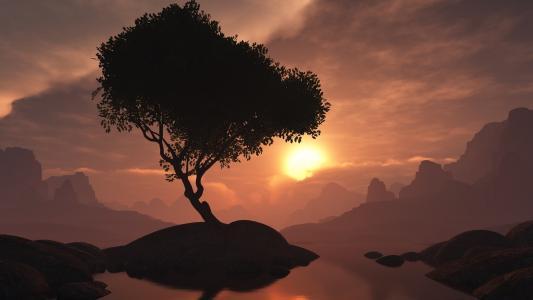 胰岛,树,晚上,日落
