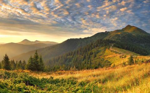 自然,树木,山,峰,云