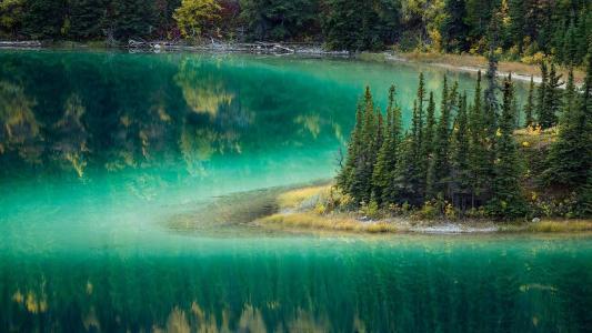 森林中的湖水仙境