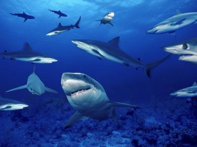 浅滩,鲨鱼,海洋蜂拥,危险,牙齿