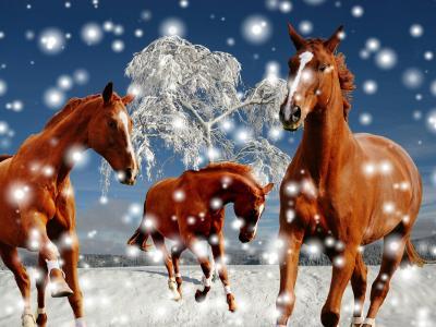 马,雪,树,冬天