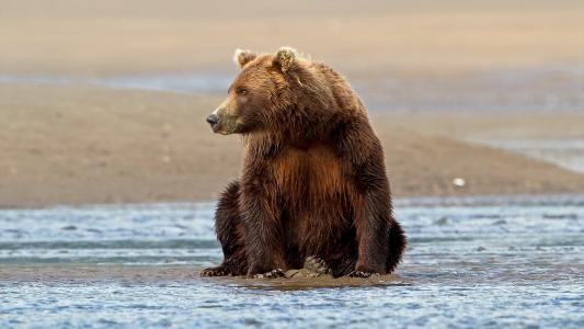 熊,性质,构成,看起来,水,岸