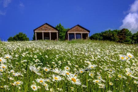 山,夏天,一束雏菊