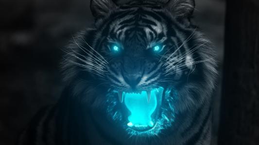 老虎,发光,幻想