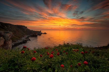 海,天空,牡丹,黎明,Vesela Marinova