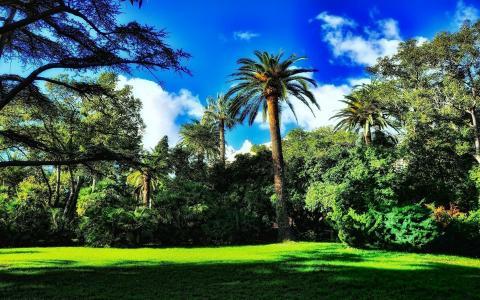 自然,棕榈树,公园