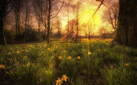 夕阳,光,树,花,性质