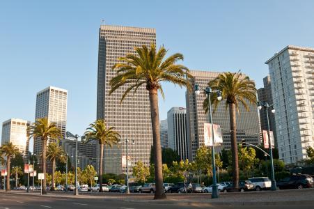 美国,棕榈树,美国,旧金山,旧金山,天空,美国