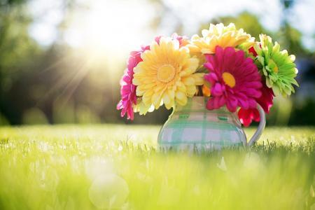 性质,草,夏天,水罐,鲜花,非洲菊,光线