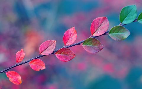 分支,秋天,叶子,网站