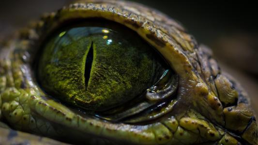 爬行动物,眼睛,颠簸的皮肤,看