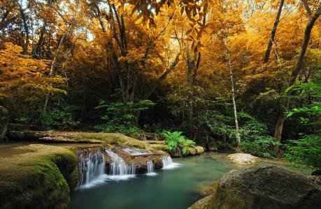 秋天,森林,蕨类植物,树木,河流