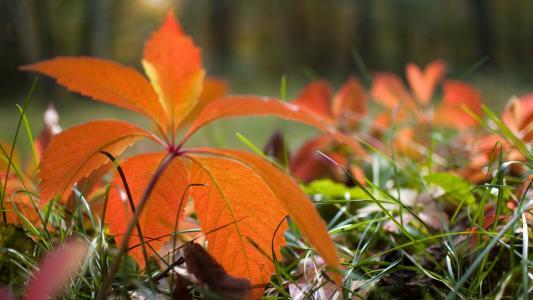 秋天,叶子,草,性质