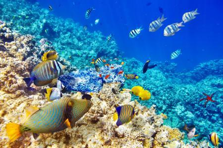 照片,水下,珊瑚,鱼,美丽