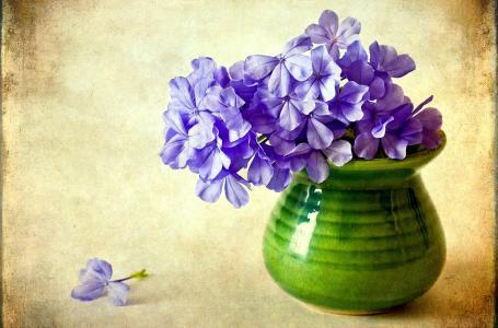 紫色,鲜花,福禄考,花瓶,花卉