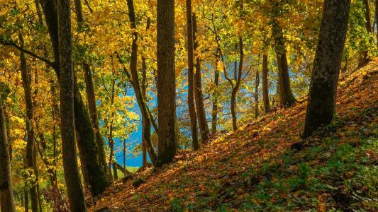 秋天,公园,叶子,树木