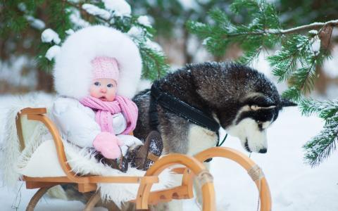 哈士奇,孩子,森林,雪,冬天,朋友,照片,积极