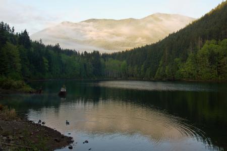 湖,鸭,山,早上,森林,性质