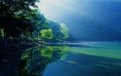 自然,湖,树,雾,夏天