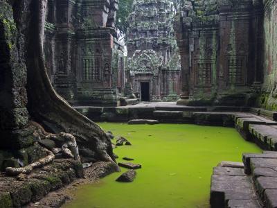 柬埔寨,寺庙,废墟,水,美女
