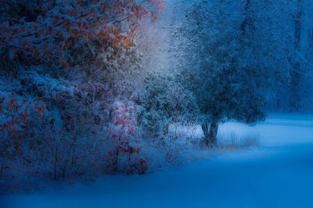 公园,叶子,雪,晚上,树,黄色