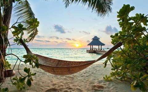 天堂,棕榈树,沙滩,热带,阳光,海洋,夏天,海洋