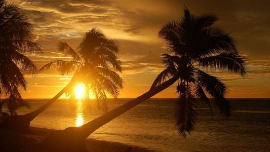 风,波浪,棕榈树,黑暗