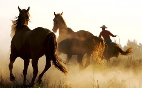 马,人,动物,马,人