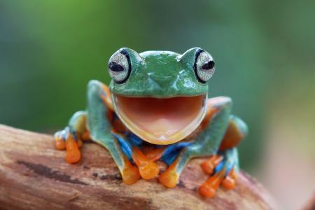 青蛙,极简主义,宏观照片