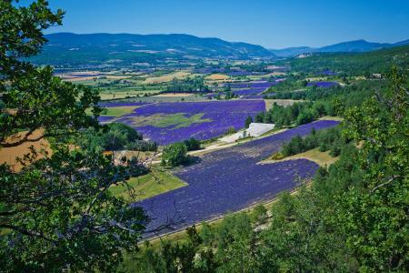 法国,景观,领域,薰衣草,性质