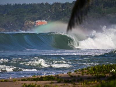 巴巴多斯,冲浪,牛,海洋,绿化,美丽