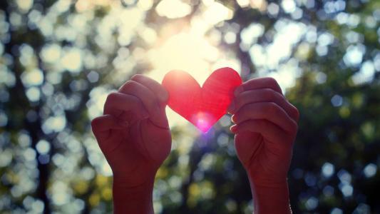 心脏,手,太阳,爱