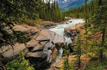 山,森林,河流,树木,美丽,密集