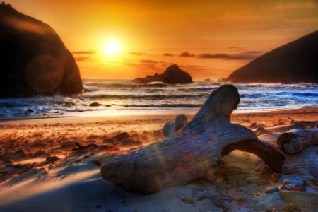 海,障碍,岸,沙,树干,海洋,日志,冲浪
