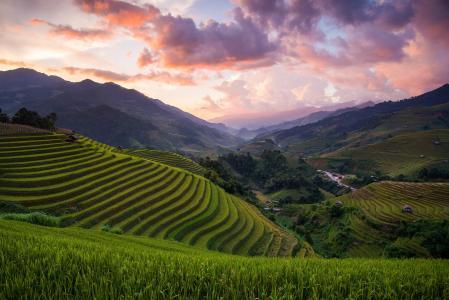 亚洲,越南,稻田,田地,丘陵