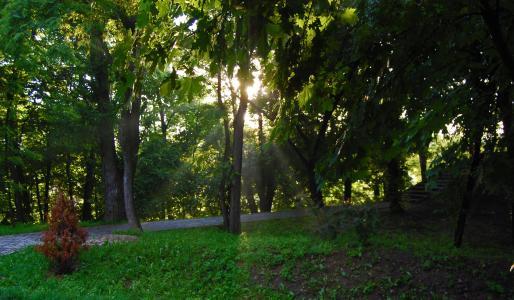 夏天,光线,太阳,树木,美丽