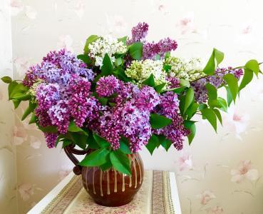 花瓶,树枝,丁香,餐巾