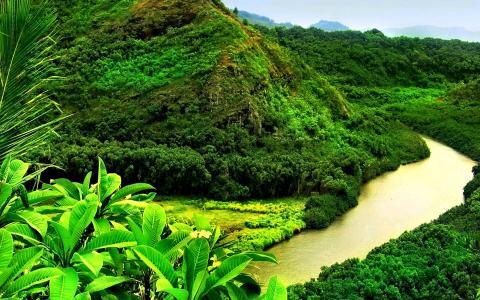 植物,绿色,山,美丽