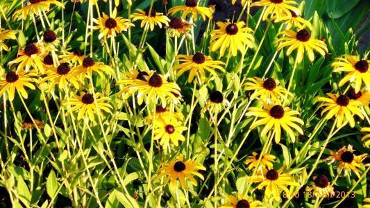 夏天,花坛,太阳