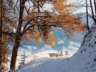 树,商店,雪,冬天